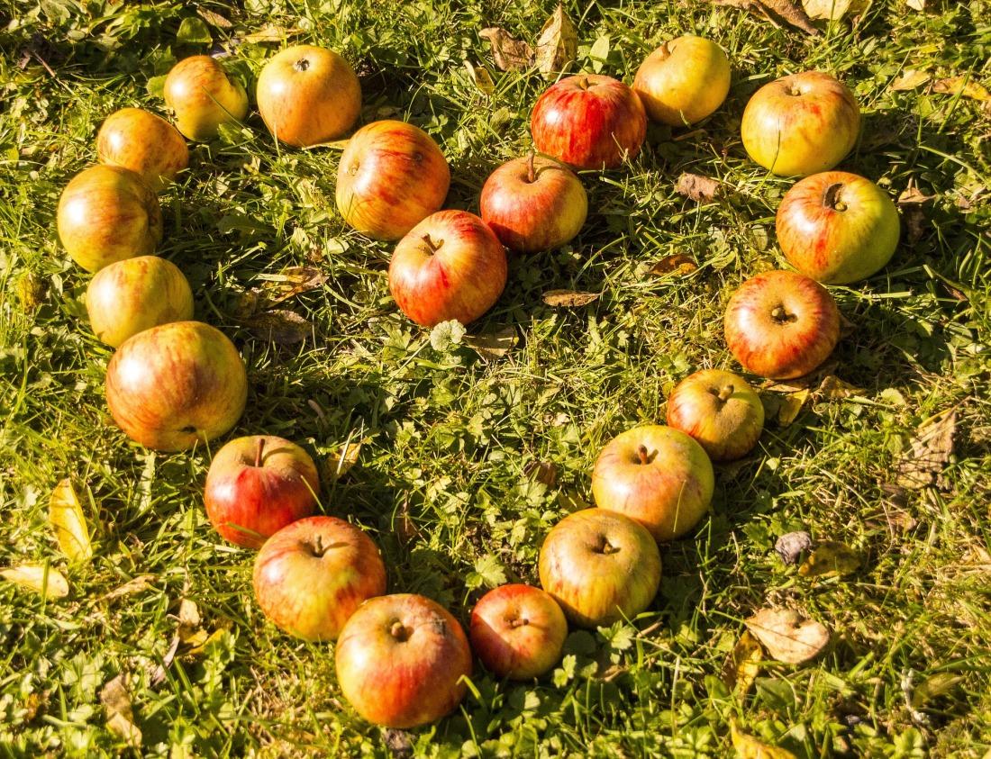 heart-apples.jpg