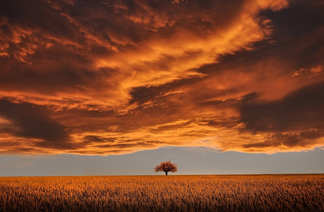 tree-under-clouds