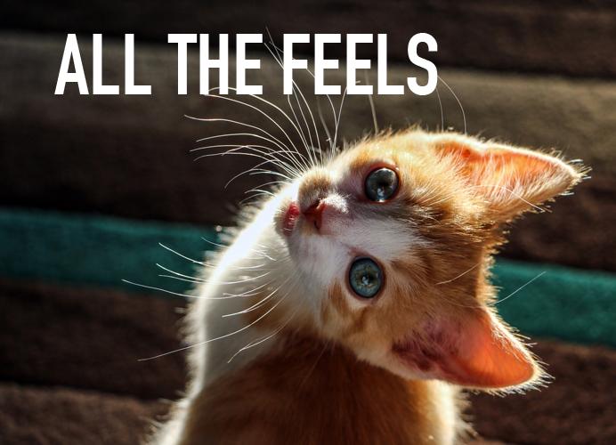 kitten head sideways asking you to feel all the feels